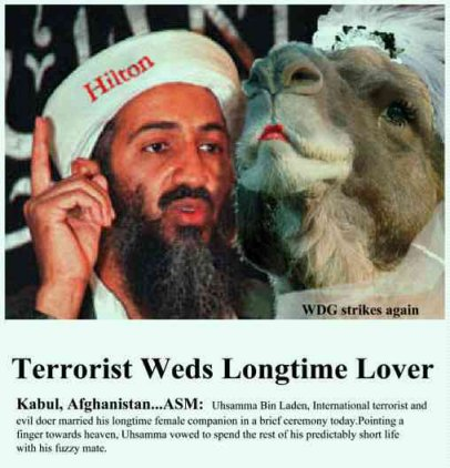 Bin Laden and camel wife